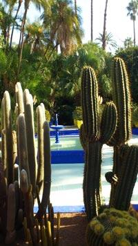 Im Jardin Majorelle (Marokko)