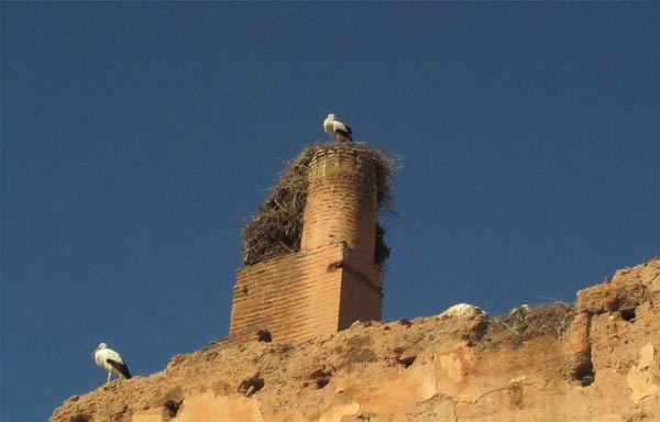 Störche El-Badi Palast Marrakesch