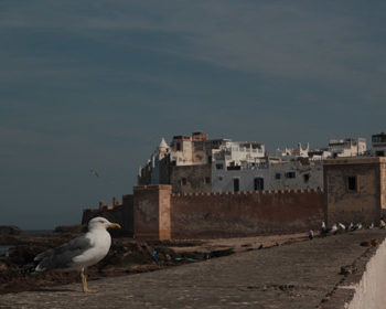 Ausflug Essaouira