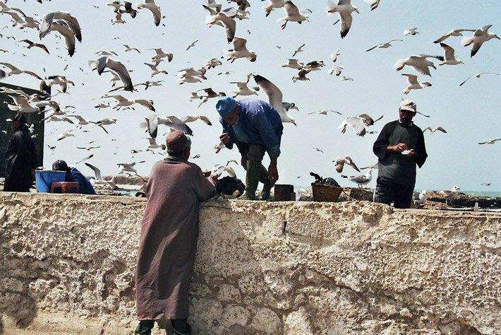 Möwen in Essaouira, Marokko