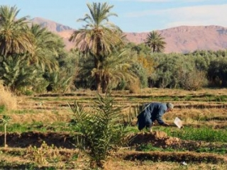 dades-tal-marokko-1