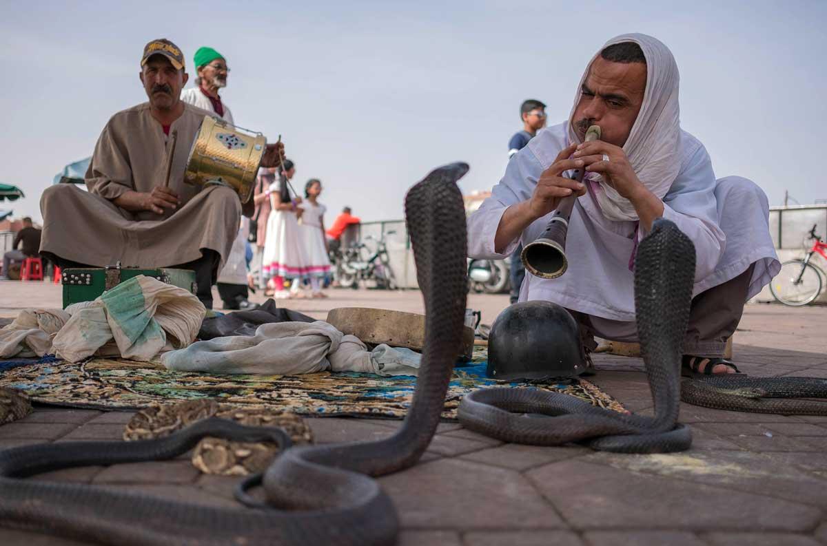 Schlangenbeschwörer auf dem Djemaa el Fna in Marrakesch Abzocke