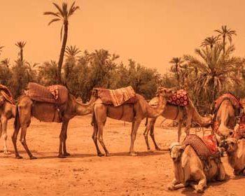 Dromedar Reiten Marrakesch