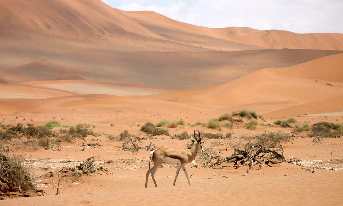 Tiere in der Sandwüste Kalahari