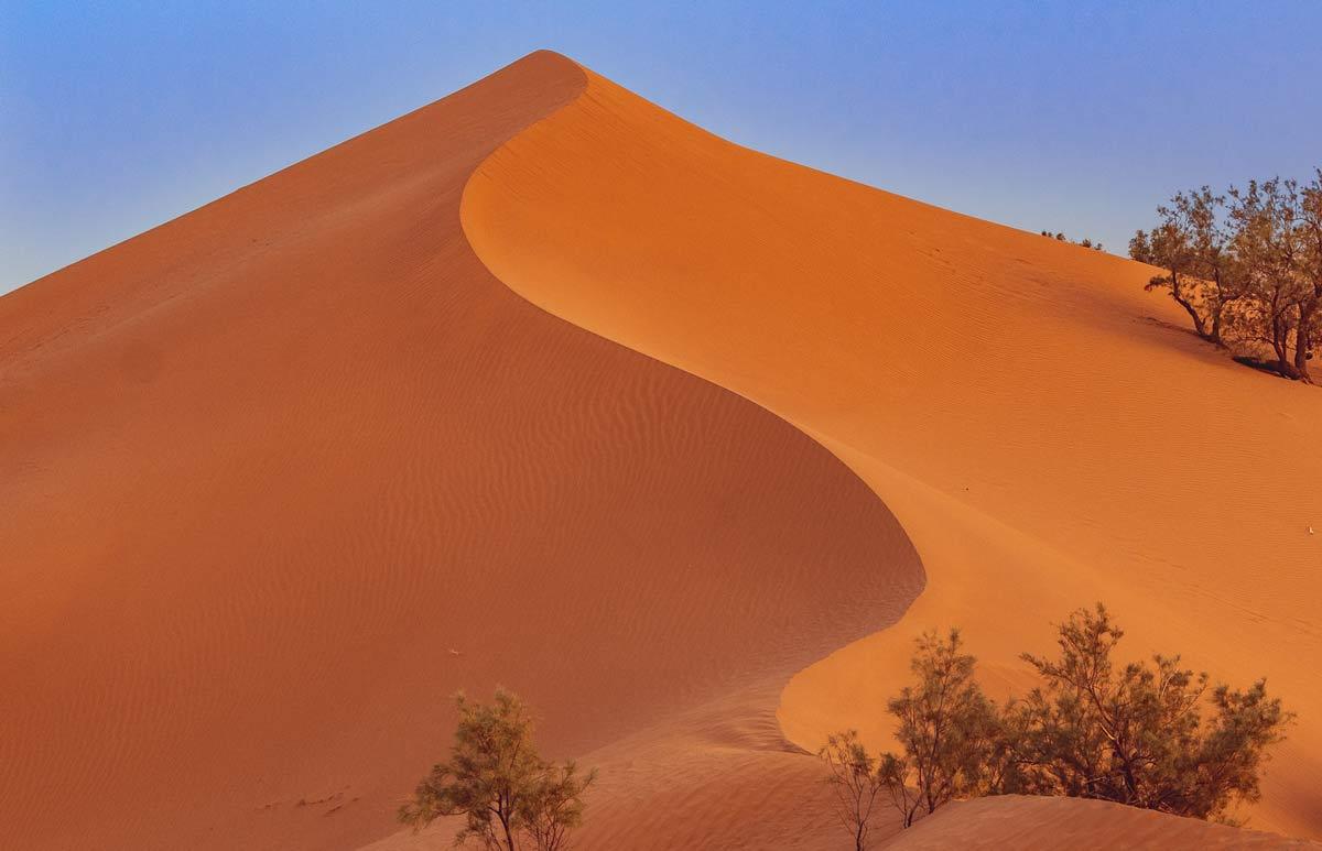 Pflanzen in der Sandwüste in der Sahara (Marokko)