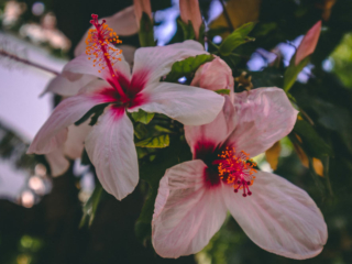 Blüten in Marokko