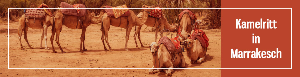 Kamelreiten Marrakesch
